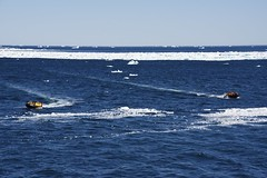 _DSC9242 (TC Yuen) Tags: glacier arctic greenland whales iceberg crusing floatingice polarregion greenlandeast