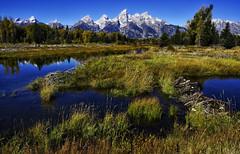 Fall in the Tetons (Jeff Clow) Tags: autumn usa fall nature seasons western grandtetonnationalpark jacksonholewyoming