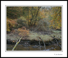 The Fallen (Joe Rainbow) Tags: autumn trees fall film creek woodland landscape cornwall fallen portra400 mamiyarz67proii