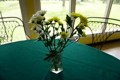 DSC01436 (Mykodakstory365) Tags: frail mykodakstory photooftheday flower peaceful nostalgic