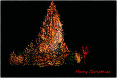 Merry Christmas flickr friends (dorameulman) Tags: christmascard christmasgreetings lights christmastree beiltmore asheville northcarolina dorameulman christmas2016 love joy