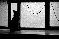 Just a shadow (-Aldievel-) Tags: window home casa animal italy blackandwhite italia cat monochrome shadows windows animali molise shadow biancoenero finestra ombre gatto ombra finestre bestie beasts