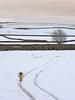 Walk the line (calderdalefoto) Tags: yorkshire dales winter snow january sheep funny
