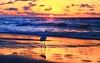 Egretta Garzetta at sunset - Tel-Aviv beach (Lior. L) Tags: egrettagarzettaatsunsettelavivbeach egrettagarzetta sunset telaviv beach egrettagarzettaatsunset nature bird sea seascapes clouds cloudysunset cloudy reflection reflections silhouette wildlife water israel travel travelinisrael telavivbeach