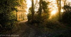 Winter Light-11 (broadswordcallingdannyboy) Tags: light twilight dusk mood sun magichour longlight sunset winterlight sparkle countryside winter frost eos7d 1740mm wideangle lightfantastic shadows lightandshadows surrey nationaltrust devilspunchbowl surreylandscape