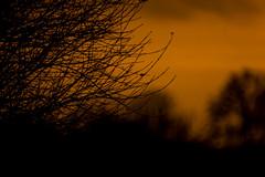 Sunset Time (betadecay2000) Tags: sun dusk sonne sol germany deutschland strase street sunset abendrot morning morgens windrad windkraftanlage windräder bäume winter outdoor himmel dämmerung sonnenuntergang may mai wolke untergang sonnenuntergänge rot rood red orange wetter weer weather meteo november 2016 heiter feld