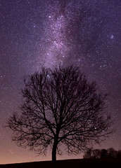 Le plus bel arbre de la maison (Romain VENOT) Tags: milkyway night nuit stars space astronomy astronomie light trees