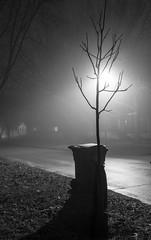 20:365 - Your Neighborhood (LostOne1000) Tags: neighborhood night foggy 3652017 yourneighborhood 365the2017edition blackwhite iowa light silhouettes road silhouettescedarrapids 20365 20jan17 fog unitedstates cy365 day20365 cedarrapids us