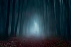Wandering in a light dome (Ans van de Sluis) Tags: ansvandesluis forest woods fog foggy mist light lightdome wandering trees nature surreal art fineart portrait people