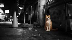 Where's the cats? |巷裡尋貓 (里卡豆) Tags: penf olympus cat cats 25mm f12 pro 2512pro 喵星人 貓