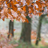 9/365 (Jane Simmonds) Tags: 9365 forestofdean nature trees beech leaves woodland 3652017