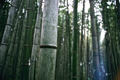 そこから、二人の時間が始まるのですね。 (aozora.umikaze) Tags: japan kyoto futari jikan hajimaru anata film filmcamera nikon ft2 aozora