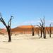 DSC02875 - Namibia 2010 Sossusvlei