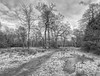 KW_8385-9 (Peter Warne-Epping Forest) Tags: snow eppingforest winter monochrome uk essex