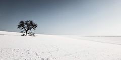 ... (a.penny) Tags: tree baum idsteiner land niedernhausen schnee snow bleach bypass apenny branches ast äste