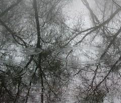 (Brandi Bonde) Tags: reflection trees water pond troutpond drip ripple vibration