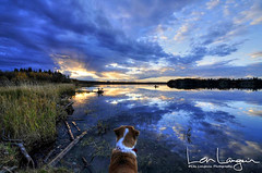 Watermark thoughts? (Len Langevin) Tags: sunset alberta lake water reflection sky dog pet glenniferlake landscape canada nikon d300s tokina 1224 autumn fall