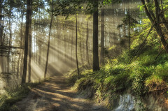 sunrays (_Jure_) Tags: morning nature forest canon hdr 3xp 550d