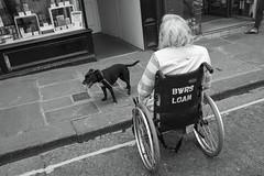 Bath, England. August 2015 (Flat Twin) Tags: england dog english monochrome blackwhite bath wheelchair streetlife socialdocumentary streetshot inpublic x100 august2015