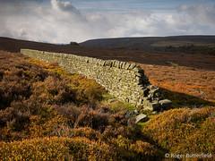 Broomhead Moor (Roger B.) Tags: autumn unitedkingdom peakdistrict sheffield drystonewall darkpeak moorland southyorkshire broomheadmoor