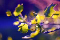 Bokeh-painted (Paulina_77) Tags: pink blue trees sunlight blur color tree green nature colors beauty leaves yellow vintage lens 50mm spring nikon colorful soft mood branch moody colours dof purple bright blossom bokeh outdoor vibrant background branches magic creative dream mother vivid illuminated depthoffield mount explore ethereal m42 bloom dreamy shallow colourful elegant pentacon f18 sunlit delicate dreamlike magical daydream depth springtime selective blooming 50mm18 springlike focusing 5018 d90 playoflight illimination bloomy pentacon50mmf18 bokehlicious pentacon50mm nikond90 pentacon50mm18 pola77