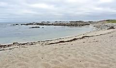 California-06614 - Asilomar State Beach (archer10 (Dennis) 141M Views) Tags: california usa sony unitedstatesofamerica free dennis jarvis pacificgrove asilomarstatebeach pointpinos iamcanadian freepicture dennisjarvis archer10 dennisgjarvis