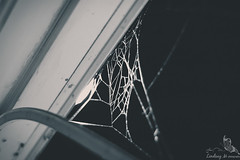 DSC_1391 (Lindsay M Photography) Tags: autumn fall halloween night d50 outside photography spider nikon october web spiderweb nikond50 lindsaymphotography