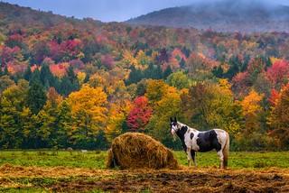 Happy Horses of Vermont