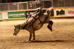 RAWF15 JSteadman 0111 (RoyalPhotographyTeam) Tags: sun royal rodeo 2015 rawf nov08