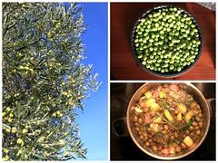 Aceitunas (Antonio Sanchez Garrido) Tags: olives aceitunas olivas