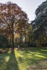 Autumnlight (ron57ab) Tags: boom hdr herfstkleuren tegenlicht bankje moretusbos kasteelravenhof herfstmschaduw