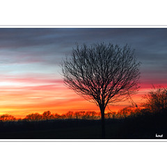 Abendstimmung (horstmall) Tags: tree silhouette evening abend kitsch soir arbre baum papercut abendrot abendstimmung schwäbischealb swabianalps albtrauf donnstetten römerstein jurasouabe horstmall