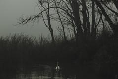 (Solsetrid) Tags: espaa macro bird nature rio del rural forest river landscape la oak spain quercus village el fungi bosque sparrow logroo rioja lugar beech robles hongos setas fagus roble pasiaje gorrion hayedo rajao toba badarn