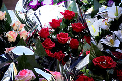 a few flowers more (explored 2015/11/14) (Fnikos) Tags: flowers roses flores rosas
