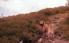 bird? (peanut.butter14) Tags: yellow hiking happydog pitbullmix pibble optoutside