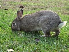coniglio (PhoToRCh) Tags: pet pets macro rabbit animals colori animali cucciolo coniglio viaggiare