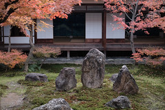 Autumn at the trace3@Kennin-ji, Kyoto (Amselchen) Tags: kyoto japan 京都 建仁寺 日本 season lateautumn earlywinter bokeh dof blur depthoffield stone garden leaves fuji fujinon fujifilm fujifilmxseries xt2 fujixt2 xf35mmf14r
