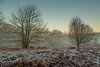 Brrrrrrrrrr (kevaruka) Tags: blidworthwoods nottinghamshire eastmidlands sherwoodforest decembersun december 2016 winter sun sunshine sunny sunset mist misty countryside 28122016 kevinfrost colour colours trees nature cold frost composition england canon canoneos5dmk3 canon5dmk3 canonef24105f4l 5d3 5diii 5d 5dmk3 christmas xmas rich warm red orange green blue wideangle uwa