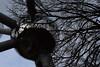 Brussels, Belgium (Nicolay Abril) Tags: brussels bruselas bruxelles bélgica belgium belgique atomium winter tree trees branches arbres hiver architecture molecules moleculas sky cielo
