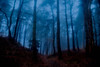 Mystical forest (jamietaylor2127) Tags: forest woods nature trees leaves uk scenic mystical landscape ngc mist fog