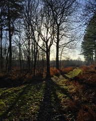 Winter Shadows (Marc Sayce) Tags: tree winter shadows 2017 forest alice holt hampshire wrecclesham farnham surrey south downs national park