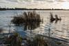 This afternoon at the river (Landleven (Irma Lit)) Tags: exif:aperture=ƒ11 geocountry exif:make=nikoncorporation exif:isospeed=100 exif:focallength=131mm geostate geocity exif:lens=1nikkorvr1030mmf3556 geolocation exif:model=nikon1v1 camera:model=nikon1v1 camera:make=nikoncorporation llek lopik thuis rivier landschap lopikerwaard kerstmis2016 hoogwater wind koud