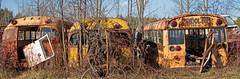 McLeans_2015 Nov 15_0100 (janetliz) Tags: mcleans junkyard autowreckers schoolbus busses