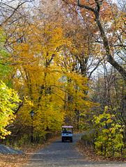 _DSC4786 (purin_cess) Tags: centralpark 2016 autumn 11月 十一月 秋 中央公園 紐約 ny newyork
