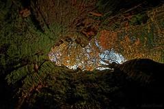 Inside the tree - À l'intérieur de l'arbre (Sébastien Vermande) Tags: canon7d france midipyrénées lot automne autumn arbre tree forêt forest souche stump enchantment retouche traitement treatment hdr samyang8mm fisheye vermande wood bois écorce bark