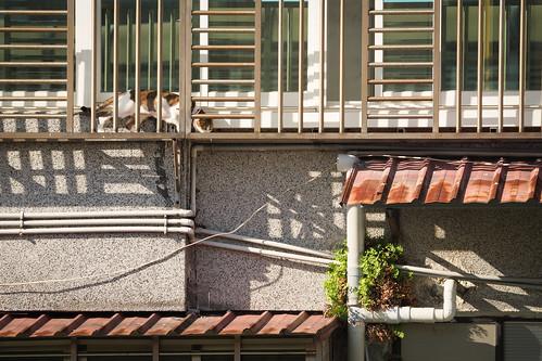 陽台喵星人 Cat|Taipei