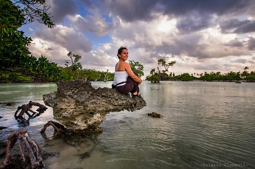 | Mangrove Bay |