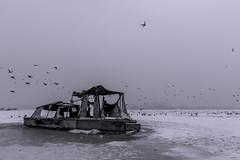 end of the world (marko_dekic) Tags: belgrade iceage winter abandoned stranded boat river birds bw