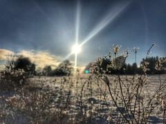 Winterlandschaft am Zeller Horn (Blende2,8) Tags: bäume wiese sonne wolken himmel burghohenzollern schnee winterlandschaft winter schwäbischealb zellerhorn