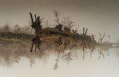 A-forest (Jorden Esser) Tags: mystical floating surreal bridge fog pollards reflection roadsign trees upsidedown water woods